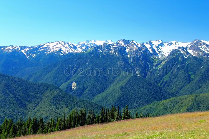 Mount Olympus and the Bailey Range from Hurricane Ridge in Summer, Olympic National Park, Washington State, USA. View across the Elwha River Valley from stock images
