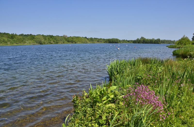 Scenic Country Park of East England. View along the Great Broad, or lake, of Whitlingham Country Park, near Norwich, East Anglia, England royalty free stock photography