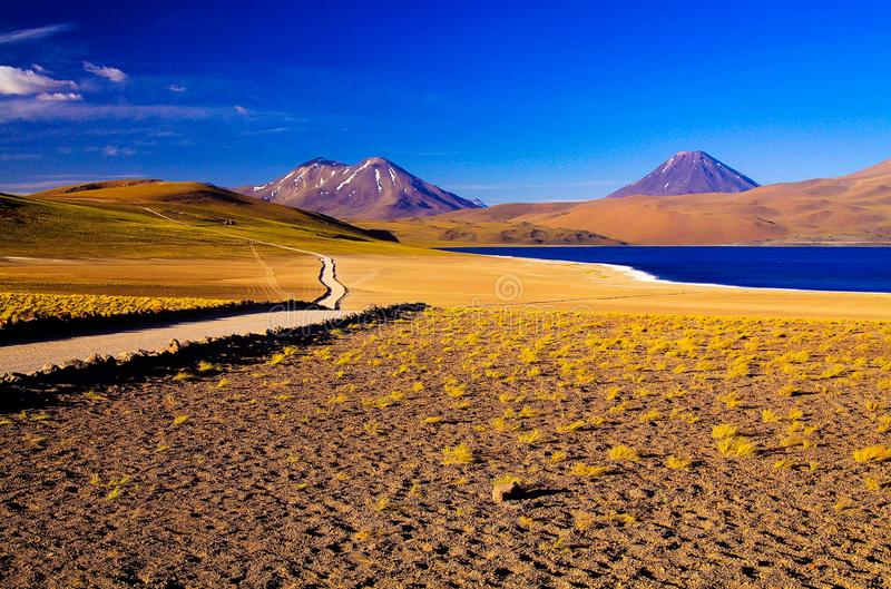 View along path and dry yellow tufts of grass on deep blue lake at Altiplanic Laguna Lagoon Miscanti in Atacama desert. With snow capped cones of volcano stock photography