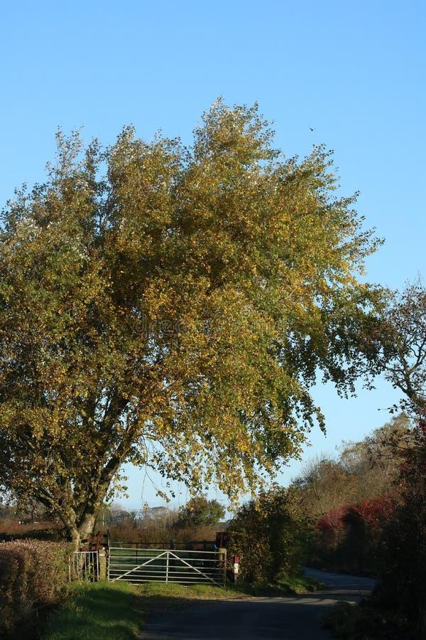 View along rural lane on sunny autumn day royalty free stock photos