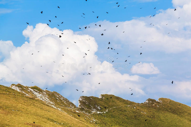 View of Alps and birds at the Rochers de Naye, Switzerland.  stock photography