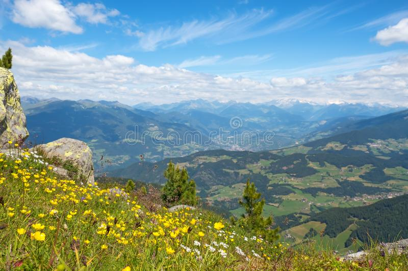 View of the Alps from a flower meadow royalty free stock photography