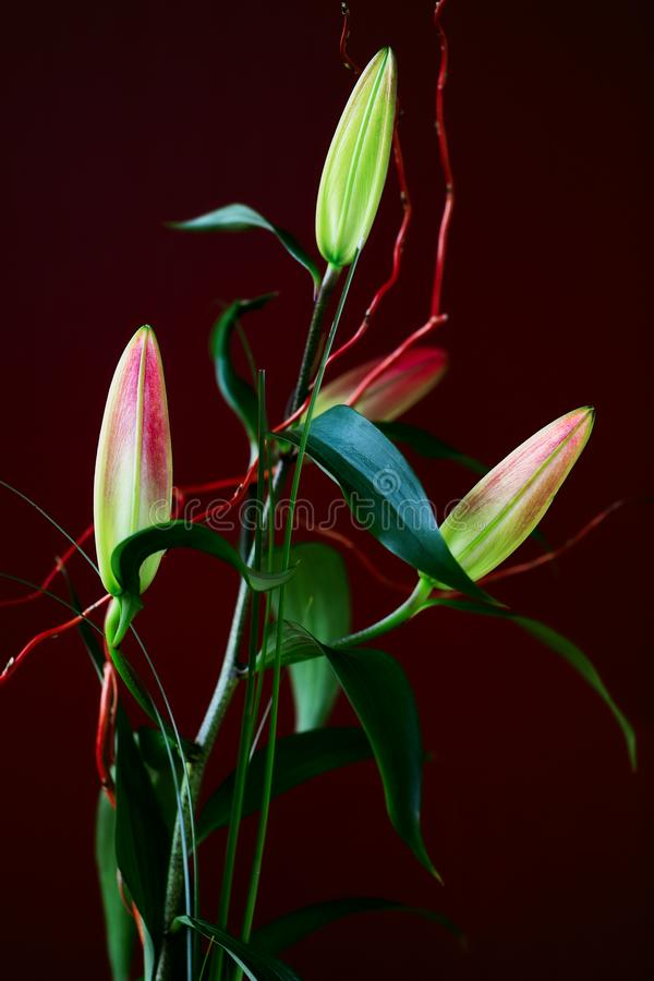 View of arranging  true lilies buds bouque. Macro photography of lively nature royalty free stock photo