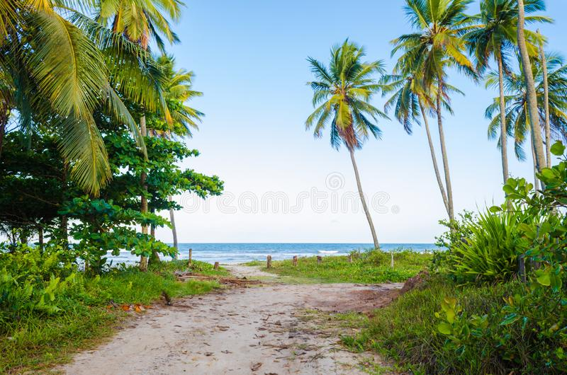 View of arrival on the beach with blue sky, sea on the horizon, coconut trees, green vegetation and a small dirt road. stock image