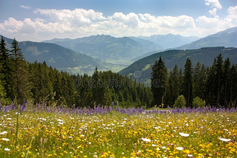 View from Austrian Alps around Zell am See. Valley with woods and beautiful flowering alpine meadow - Austria stock photography