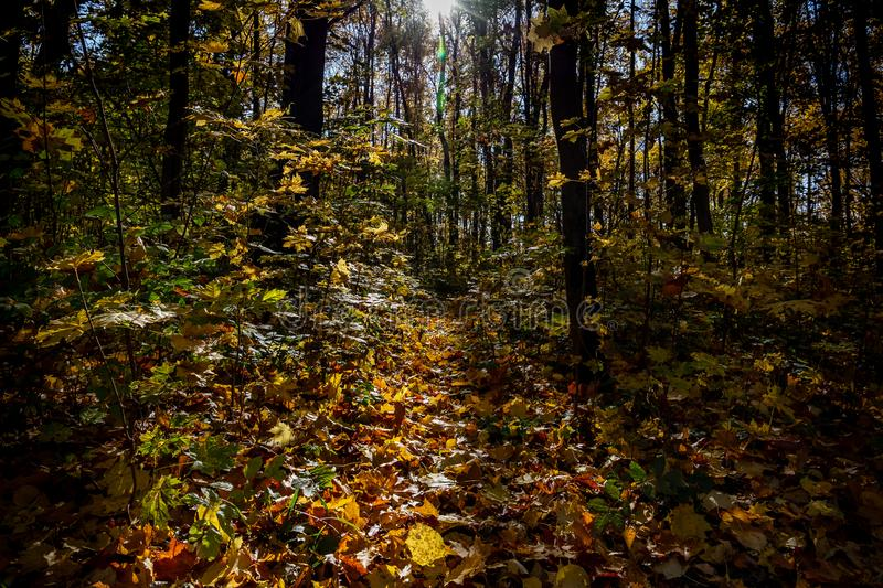 View of autumn forest lit by the rays of the sun royalty free stock photos