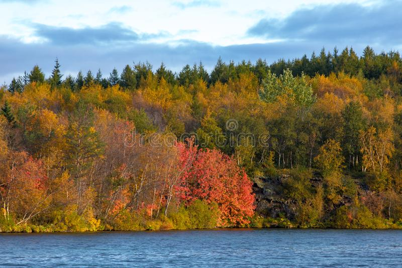 View of the autumn forest and the surface of the lake. Beautiful autumn landscape with water and bright vegetation. Iceland. Europ stock images