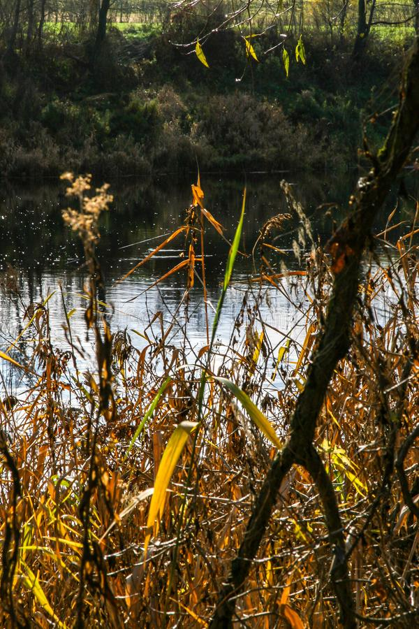 Autumn landscape with colorful trees and river. View on autumn landscape of river and grass in sunny day. Grass on river coast in autumn day. Reflection in water stock photography