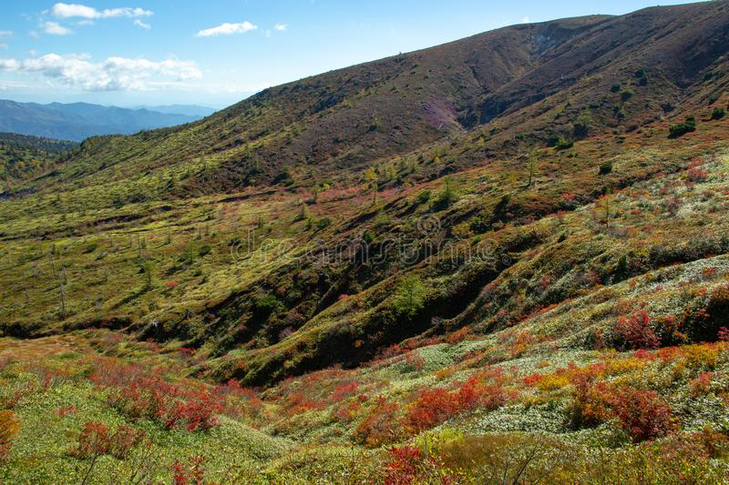 View of autumnal leaves of Shiga Kogen. stock photography