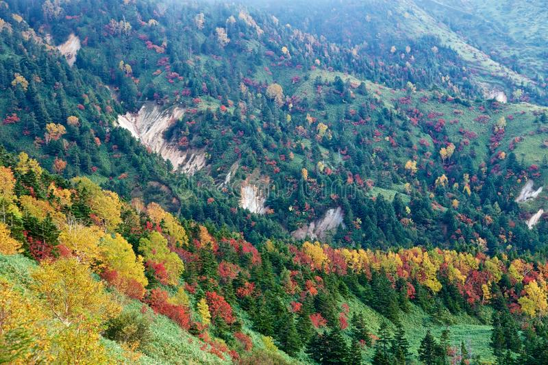 View of autumnal leaves of Shiga Kogen. stock photos
