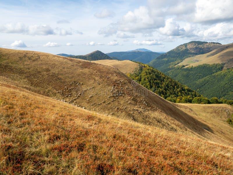 View of the Baiului Mountains, Romania. The Baiu Mountains are mountains in central Romania, a few kilometers south of BraÈ™ov stock images