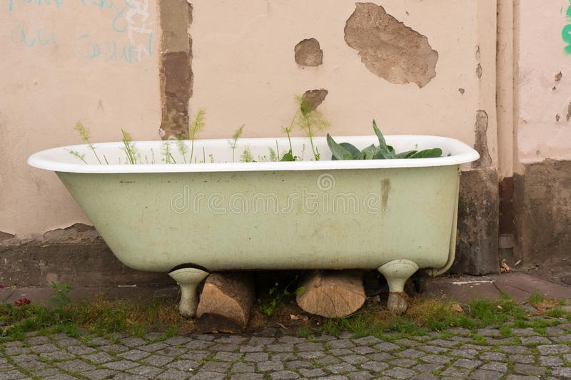 View of basic urban gardening in a defunct old bathtub. Detail view of basic urban gardening in a defunct old bathtub royalty free stock photos