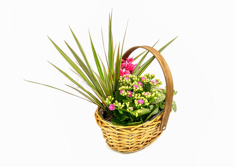 Basket full of plants. A view of a basket full of plants on a white background royalty free stock images