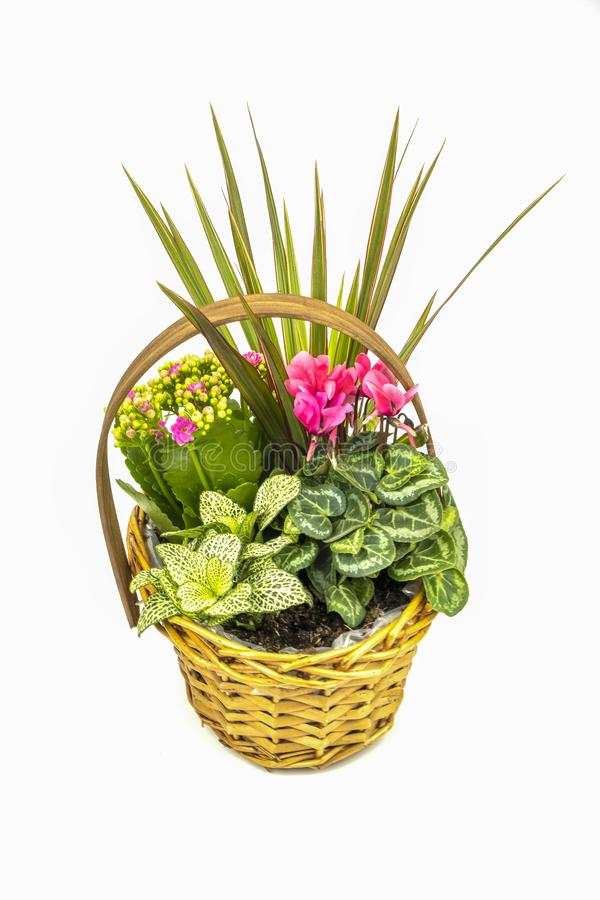 Basket full of plants. A view of a basket full of plants on a white background royalty free stock photo