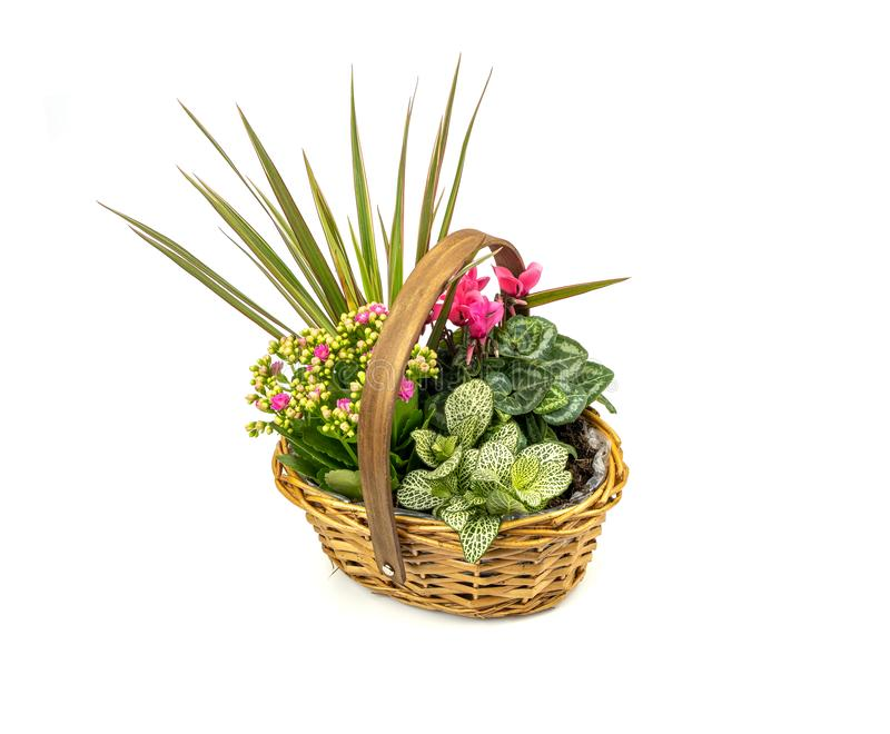 Basket full of plants. A view of a basket full of plants on a white background stock images