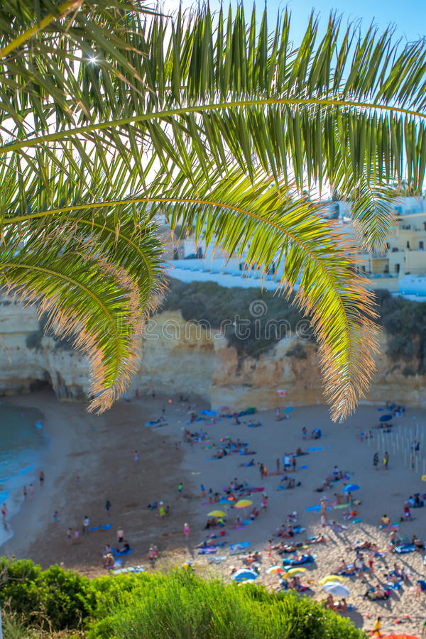View of the beach in Carvoeiro through the leaves of the date palm royalty free stock image