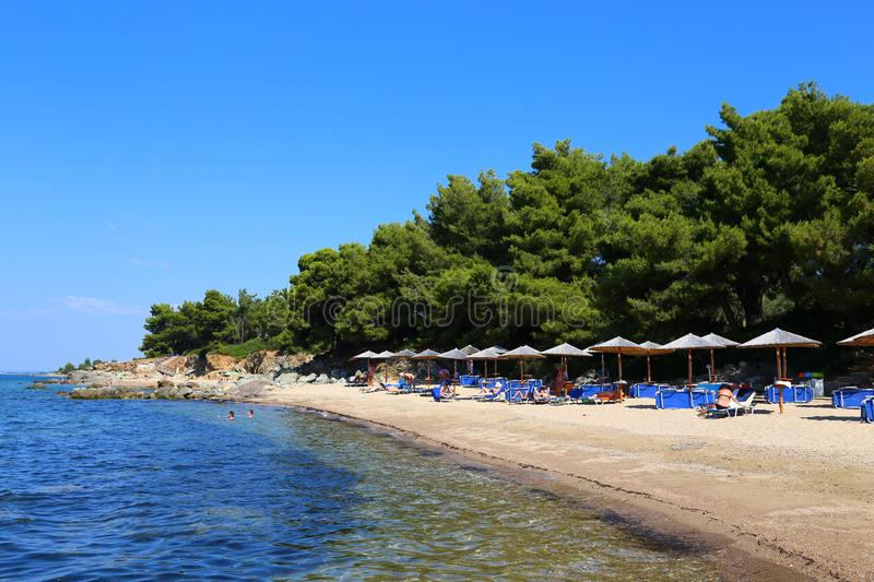 Coniferous beach with umbrellas in Halkidiki ,Sithonia. View of the beach from the side. coniferous beach with umbrellas in Halkidiki ,Sithonia royalty free stock image