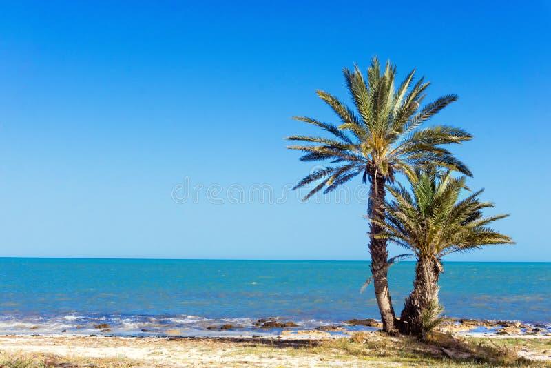 View of beautiful beach in Djerba, Tunisia. Beautiful landscape of the Mediterranean sea with palm trees in Djerba, Tunisia royalty free stock photo