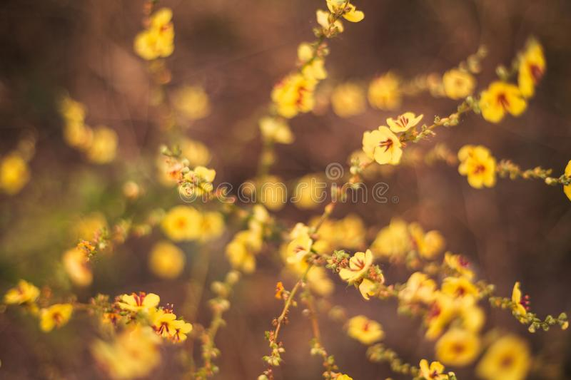 A view of beautiful flowers in the garden. Arounded by grass. Park. Soft focus royalty free stock photography