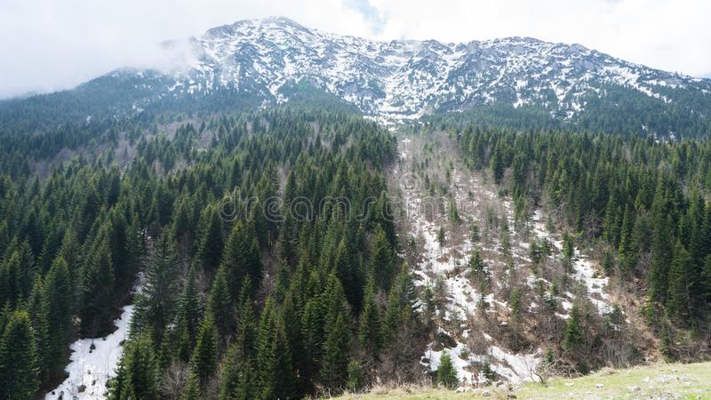 View of beautiful landscape in the Montenegro border with Bosnia with green forest and snow-capped mountain tops in the background. Day cloudy in springtime stock photo