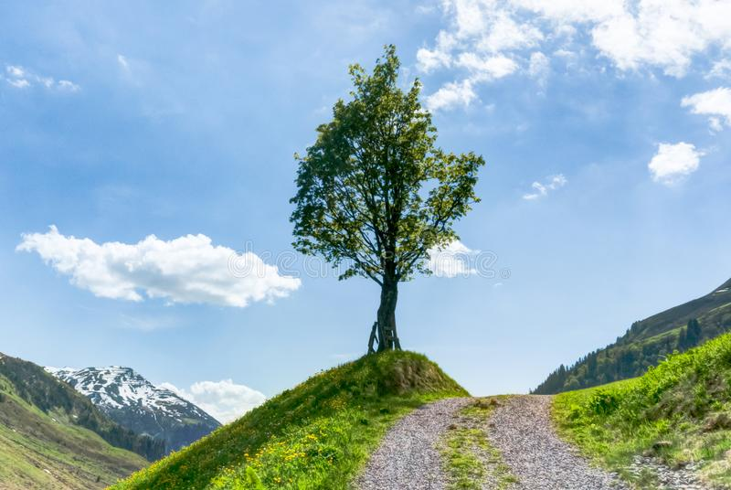 Lone tree on the side of a gravel country lane with blue sky and moutain landscape behind royalty free stock photos