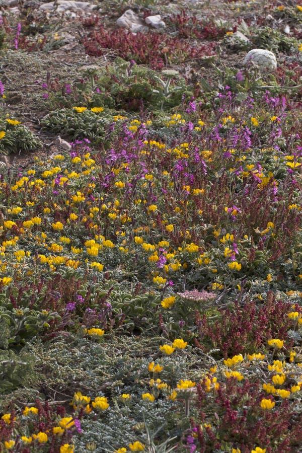 Diverse spring flora of Sagres royalty free stock photography