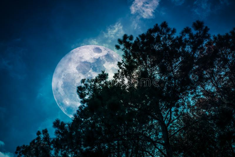 Silhouette of trees against sky and super moon over serenity nature background. View from below. Beautiful night landscape. Silhouette of trees against night sky stock photos