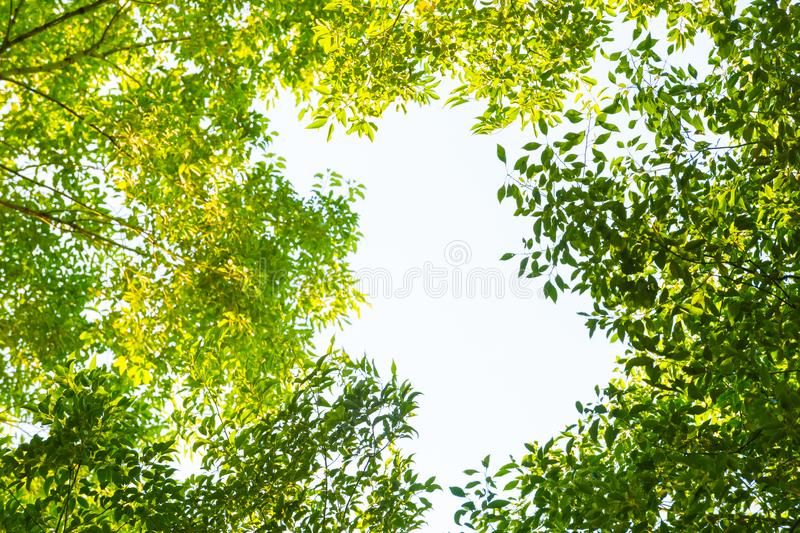 Top view with tree branch and blue sky royalty free stock image