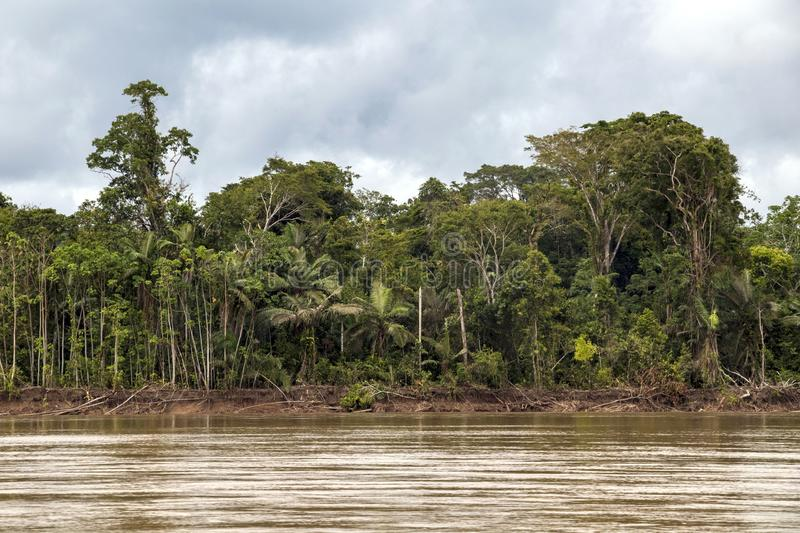View of Beni river and rainforest of Madidi national park in the upper Amazon river basin in Bolivia, South America stock photography