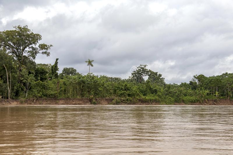 View of Beni river and rainforest of Madidi national park in the upper Amazon river basin in Bolivia, South America stock photos