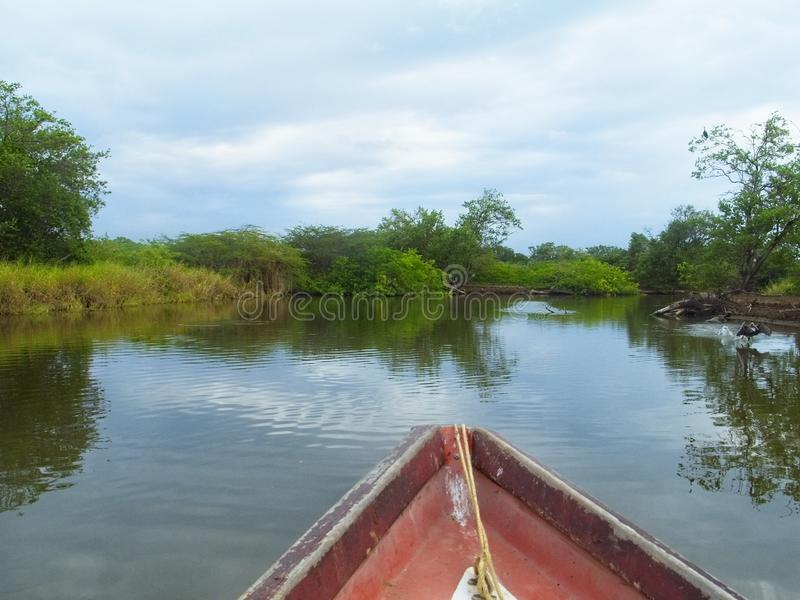 A view from a boat of Unare wetland lagoon exploring  the Caribbean sea, Venezuela royalty free stock photos