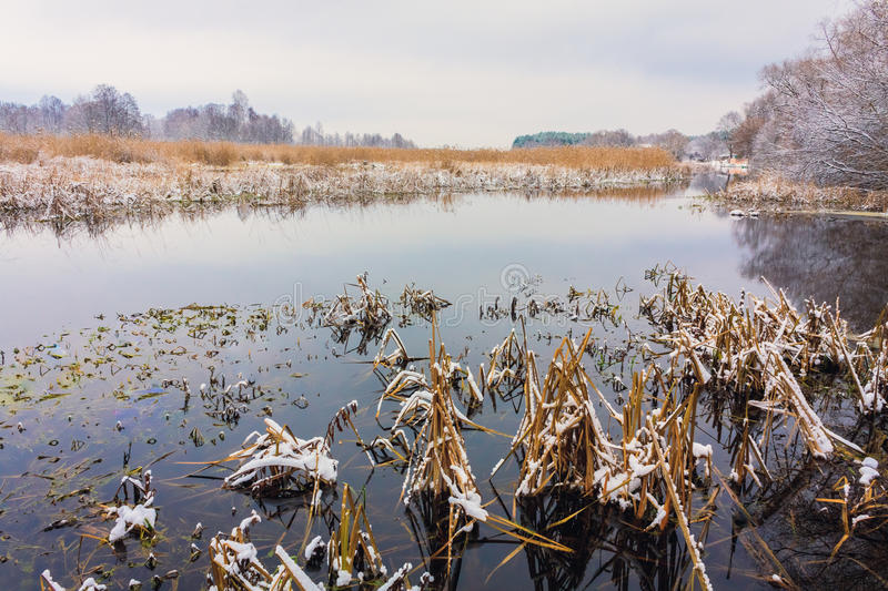View On The Bog. Grass And Water. stock images