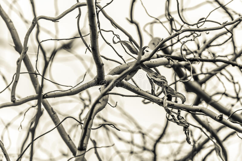 View of a branchy tree stock image