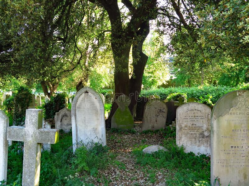 Old graves under a tree at the Brompton Cemetery London. View of Brompton Cemetery, in London, UK, with ancient funerary steles and cross located under a stock photography