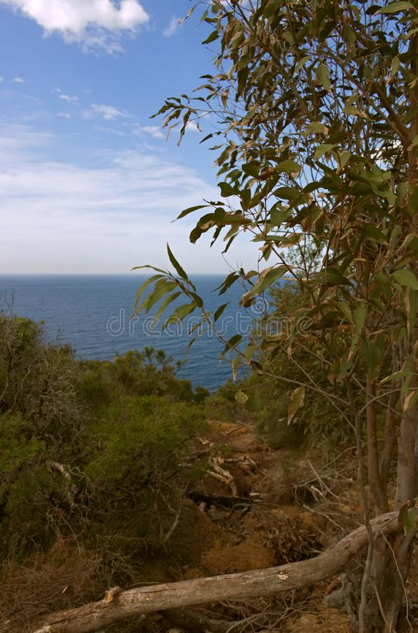 View through the bush to the Ocean in the wyrrabalong National park New South Wales Australia stock photos