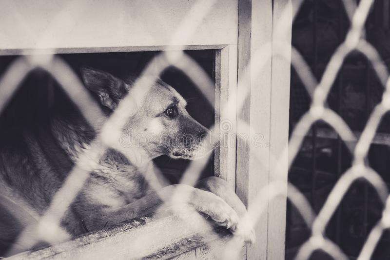 View through the cage on the sad dog with big eyes. Black and white photo. Animal abuse and shelter concept. stock photos