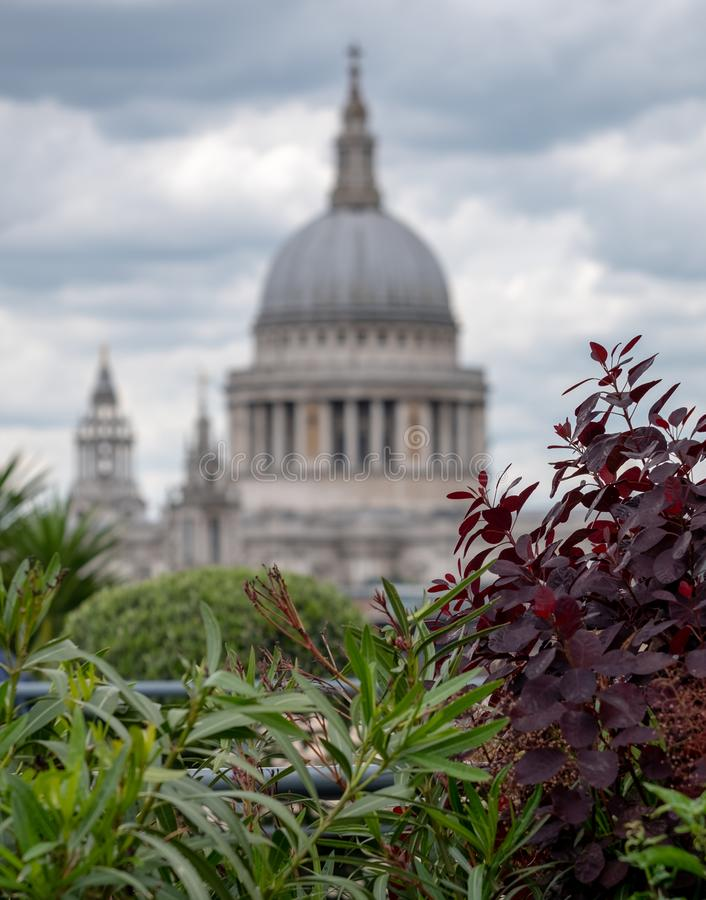 View from Cannon Bridge Roof Garden, London UK. Dome of St Paul`s Cathedral in soft focus in the distance. stock image