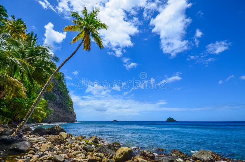 Caribbean martinique wild beach. View of a caribbean martinique wild beach Coconut with a sunny day stock images