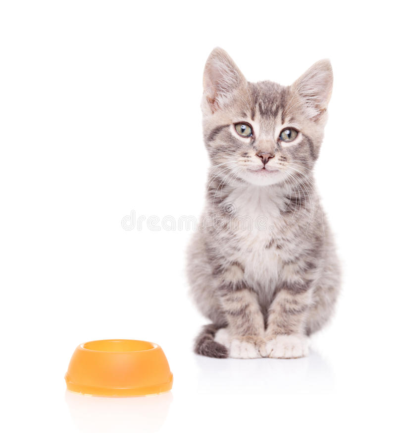 A view of a cat and an empty food bowl next to it. Isolated on white background royalty free stock image
