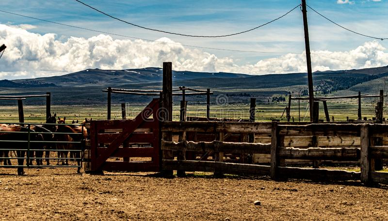 View Of Cattle At The Hunewill Ranch royalty free stock image