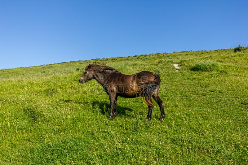 A view of a .chestnut wild horse on a green hill slope under a majestic blue sky royalty free stock photos