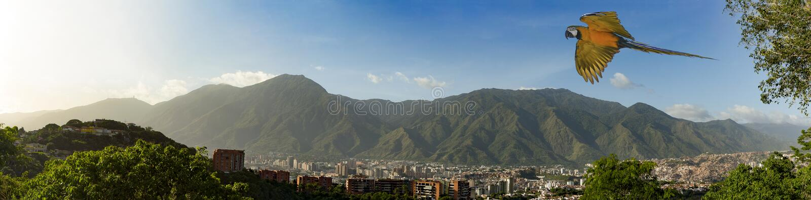 View of the city of Caracas and its iconic mountain el Avila or Waraira Repano and flying macaw.  royalty free stock photography