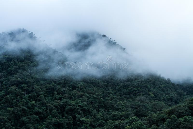 View on cloud rain forest in Peru, jungle in tropical region, travel adventure in Peru, clouds above rain forest, beautiful royalty free stock image