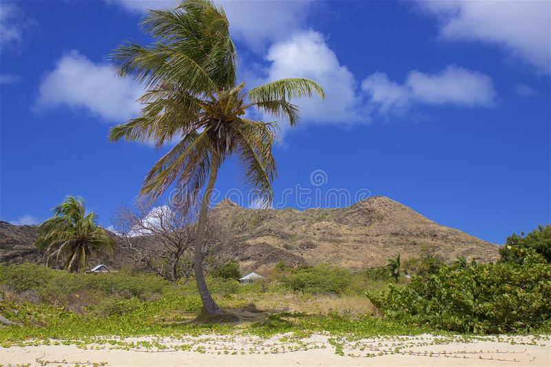 Cockleshell beach in St Kitts, Caribbean. View of Cockleshell beach in St Kitts, Caribbean royalty free stock image