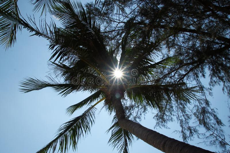 View on the coconut palm trees on a background of a blue sky. royalty free stock photo