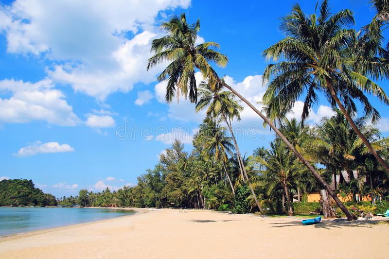 The view on the coconut palm trees on a sandy beach near to sea on a background of a blue sky. Toned photo. stock photos
