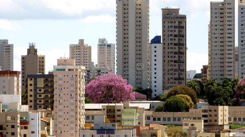 Urban landscape in Uberlandia, Brazil. View of the colored city of Uberlandia by a beautiful pink Ipe a kind of tree stock photography
