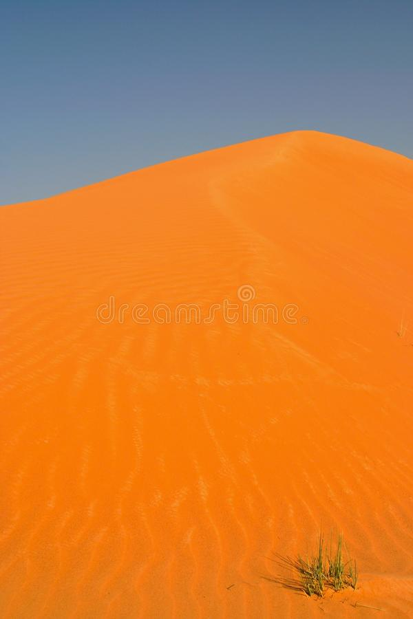 View on cone of orange red sand dune against blue sky with isolated lost tuft of green grass royalty free stock images