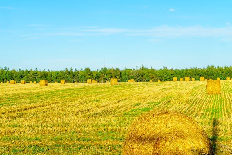 Countryside and haystacks near Borden-Carleton, PEI. View of countryside and haystacks near Borden-Carleton, Prince Edward Island, Canada royalty free stock images
