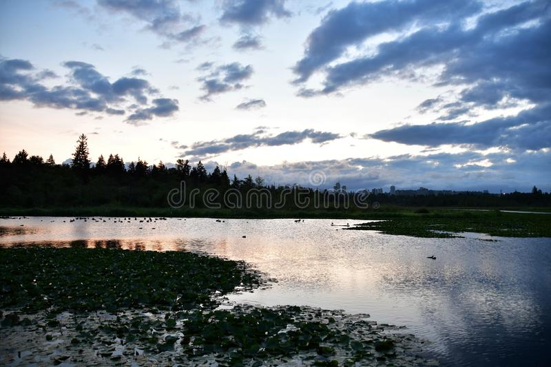 A view of daybreak at Burnaby lake. stock image